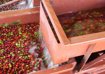 Coffee production in Brazil